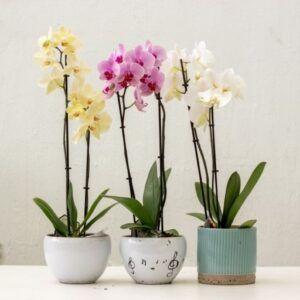 comprar orquidea tenerife
