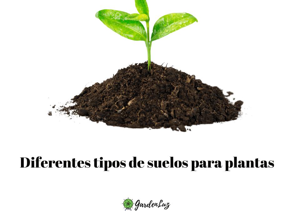 Diferentes tipos de suelos para plantas y flores