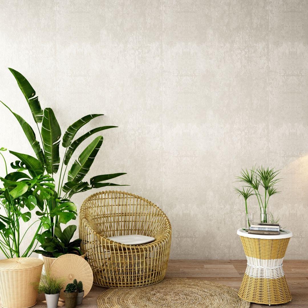 Plantas de interior Tenerife