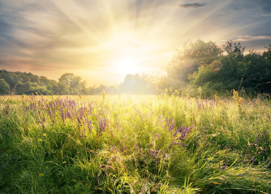 el sol y las plantas