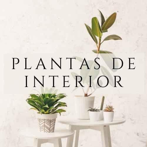 plantas de interior en tenerife