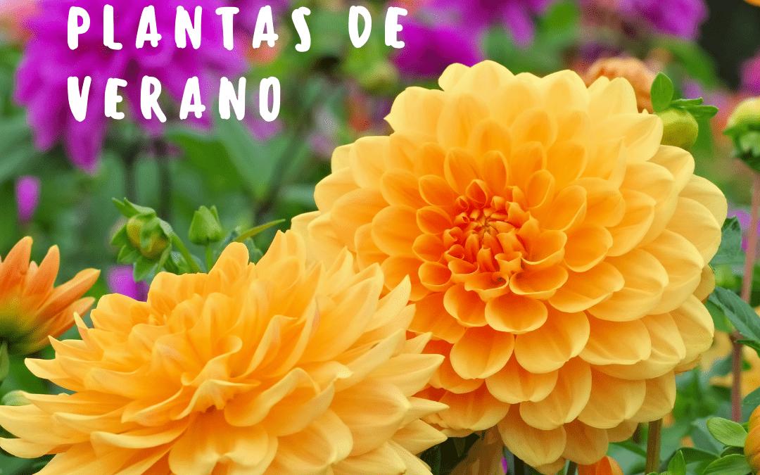 Nuestras 10 Plantas de verano