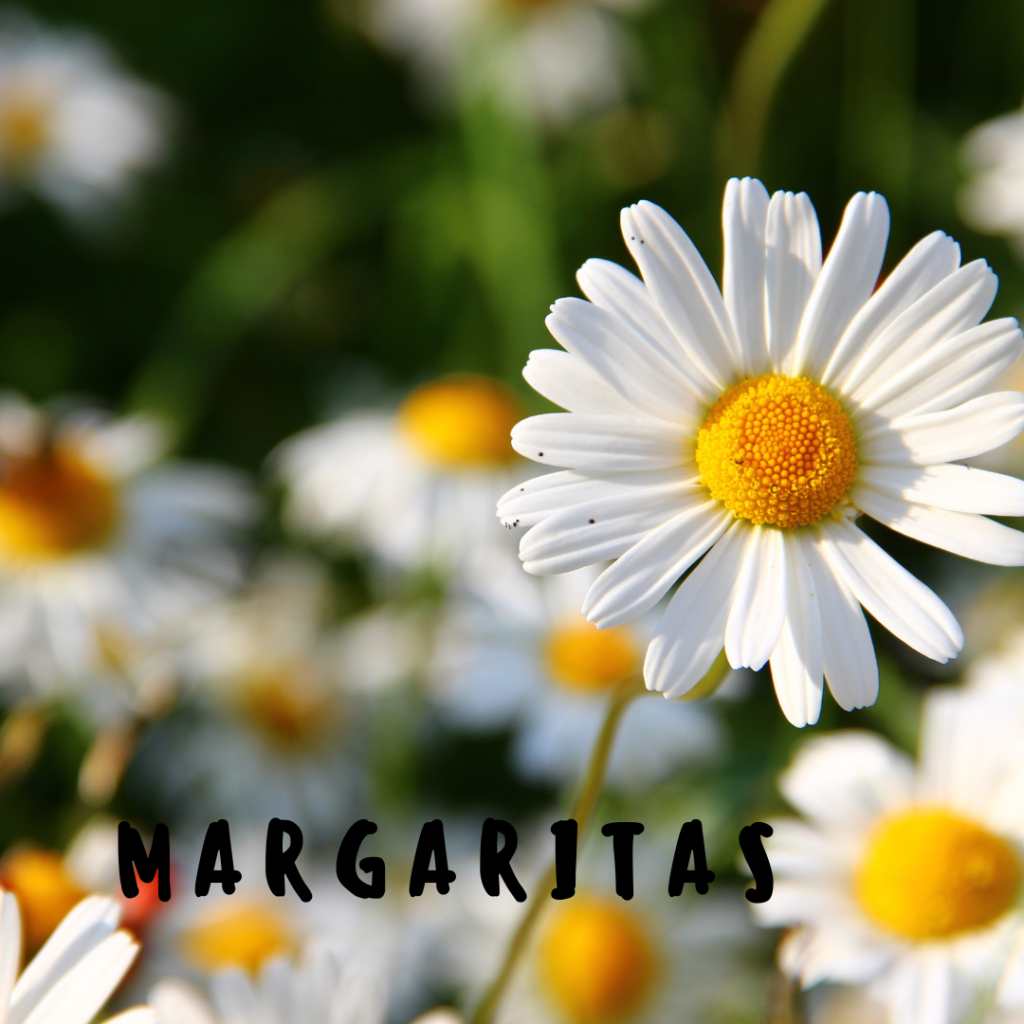 plantas de verano con flor