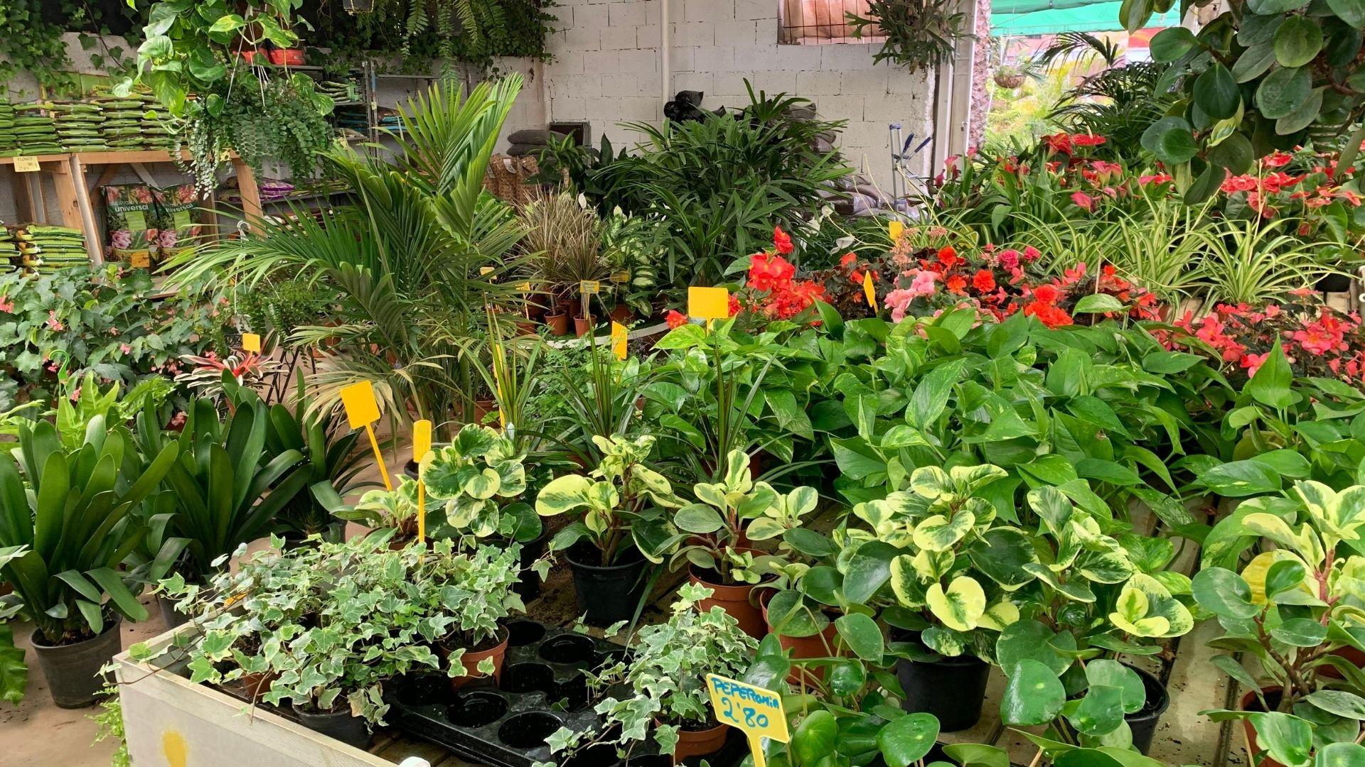 comprar plantas de interior en tenerife