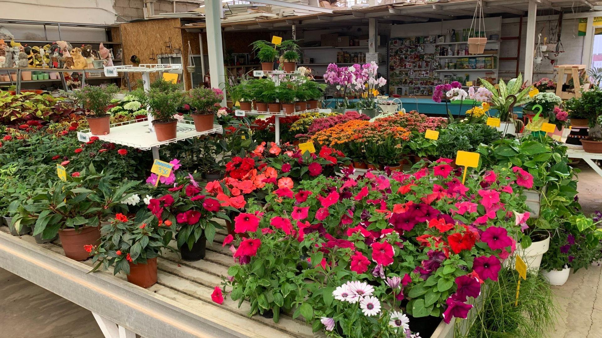 comprar plantas de exterior en tenerife
