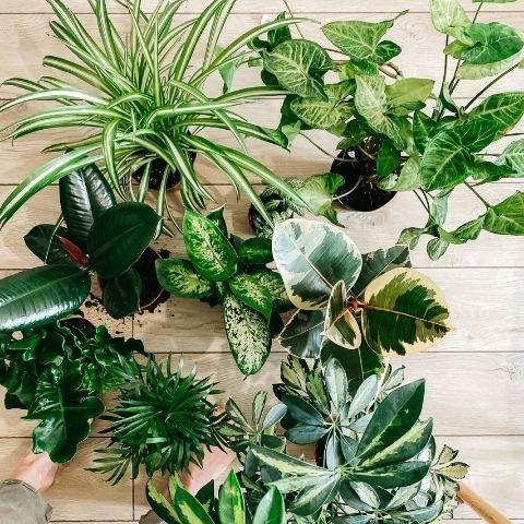 plantas semisombra tenerife