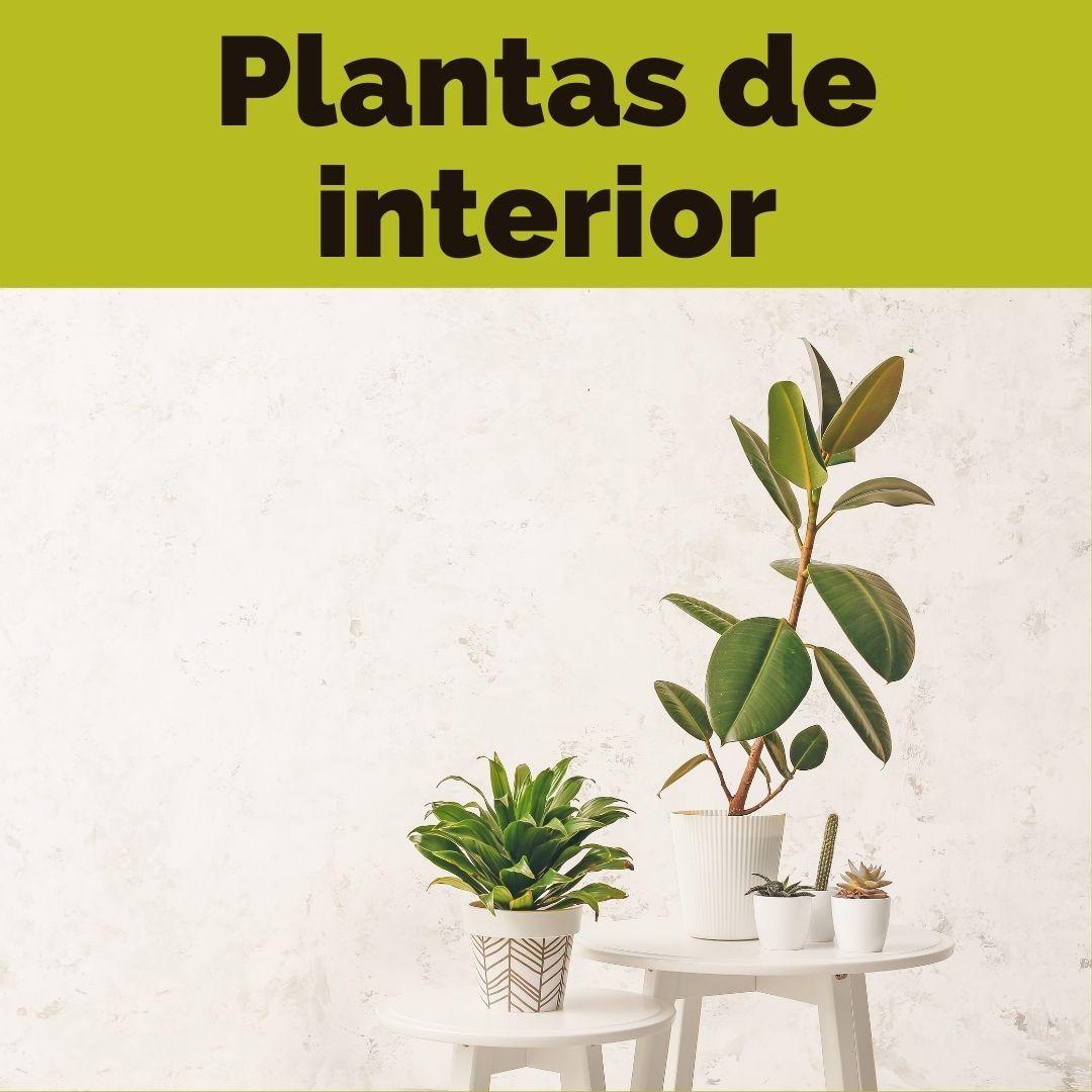 comprar plantas de interior tenerife