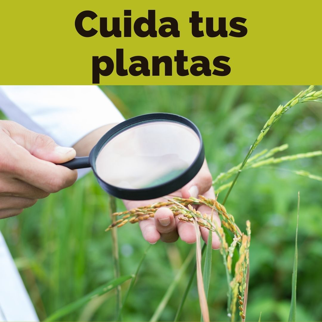 antiplagas plantas tenerife